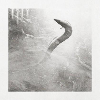 ABSENTA - Eel